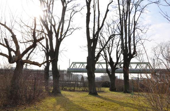 Neu Leopoldau -  Bauplatz H1 - Park mit Bäumen