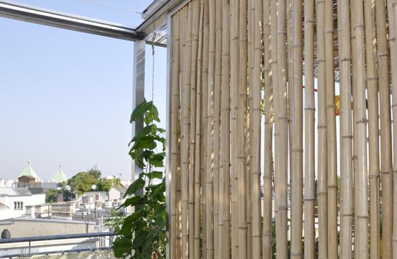 Dachterrassen S - Bambuswand