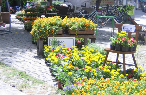 Plückblumen und Festivalbanner