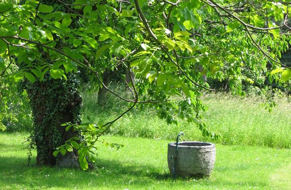 Brunnen unter Baum