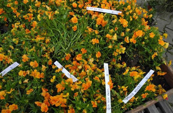 Pflückblumen mit Spruchbändern
