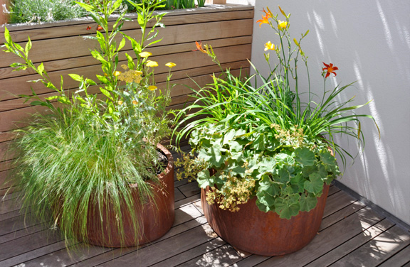 Dachgarten - Bepflanzung